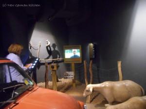 Klimahaus-italy-sheeps