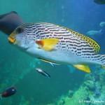 Klimahaus-samoa-fish