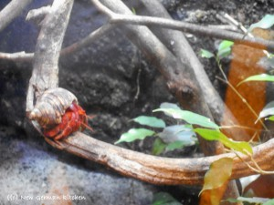 Klimahaus-samoa-snake-crab